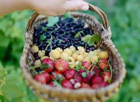 清爽不油腻盛夏的果实