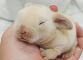 一组超小只可爱的小兔子