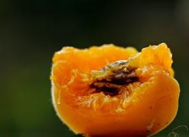 一组成熟了的杏子图片欣赏