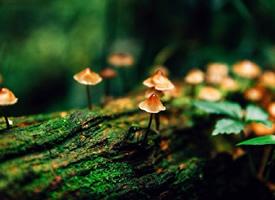 一组树上长满了的小蘑菇图片