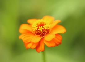 一组超级唯美的花开图片