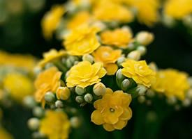 小清新唯美花卉图片电脑壁纸
