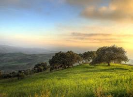宽广绿色的草原风景图片