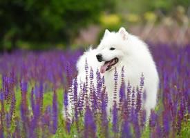 一组小狗狗的室外美照图片欣赏