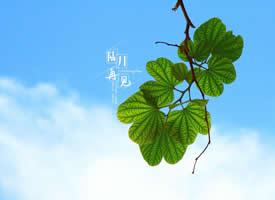 小清新文字植物图片桌面壁纸