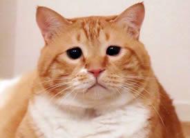 喜欢赖床的胖橘图片
