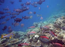 奇妙多彩的海底小鱼
