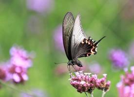 昆明名花谷拍摄的蝴蝶