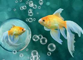 美妙灵巧的金鱼图片