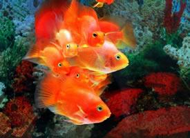 喜欢游泳的鱼儿图片