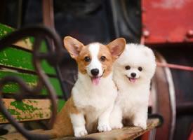 一组超级可爱的小狗狗图片