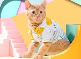 酷帅好看的橘猫图片