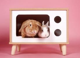 一组可可爱爱的两只小兔子