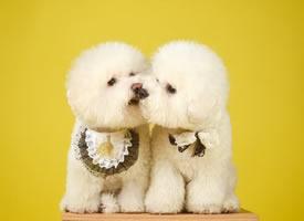 一组精致的狗狗图片欣赏