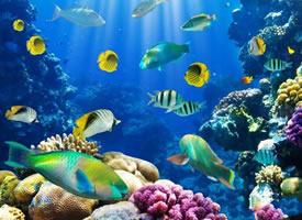 海洋里缤纷的鱼儿