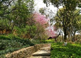 杭州半山国家森林公园风景图片