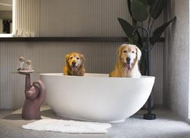 浴缸里的小狗狗图片欣赏