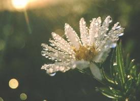 一组意境感特美的雏菊图片
