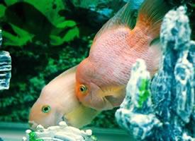 一组美丽的观赏鱼儿图片