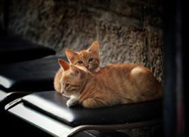 两只小橘猫图片