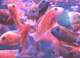 成群结队的小鱼图片