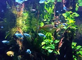海洋馆里的各色鱼儿图片