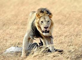 肯尼亚马赛马拉草原拍的野生动物
