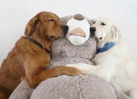 呆萌可爱的狗狗图片手机壁纸