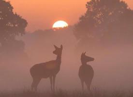 一组森林里的麋鹿图片欣赏