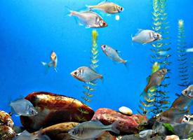 上海水族馆里的鱼儿图片