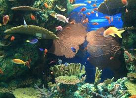 五颜六色的海底小鱼