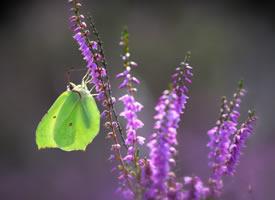 一组灵动唯美植物上的蝴蝶图片