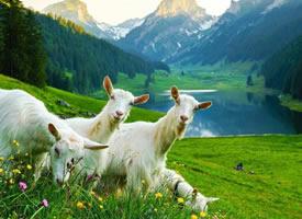 瑞士,在鸟语花香的清晨醒来