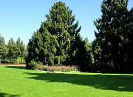 瑞士伯尔尼玫瑰公园风景图片