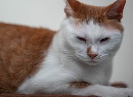 一只安静的大橘猫