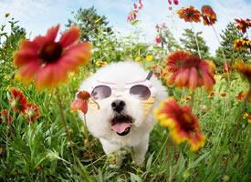 顽皮可爱花丛中的狗狗