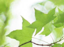 夏天绿植清新风景图片桌面壁纸