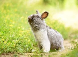 兔兔好可爱,眼睛像宝石