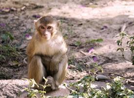 一组欢快玩耍的猴子图片