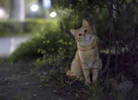 摄影师镜头下的橘猫,太可爱了