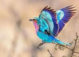 大自然里漂亮的小鸟图片