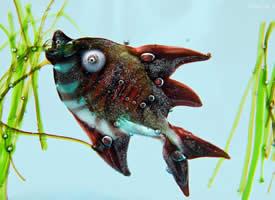 海洋动物图片欣赏
