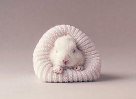 一组超可爱奶萌奶萌的兔子