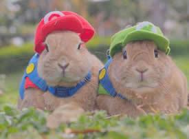 一组超级可爱萌萌的小兔子