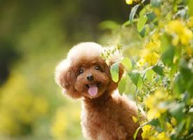 一组爱笑可爱的狗狗图片