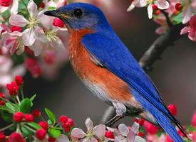 花枝上灵动的小鸟