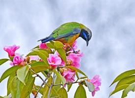 一组花枝招展的小鸟图片