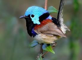 大自然胖胖的小鸟们