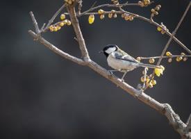 枝头上跳跃舞蹈的鸟儿