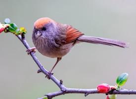 一群貌美的小鸟图片
